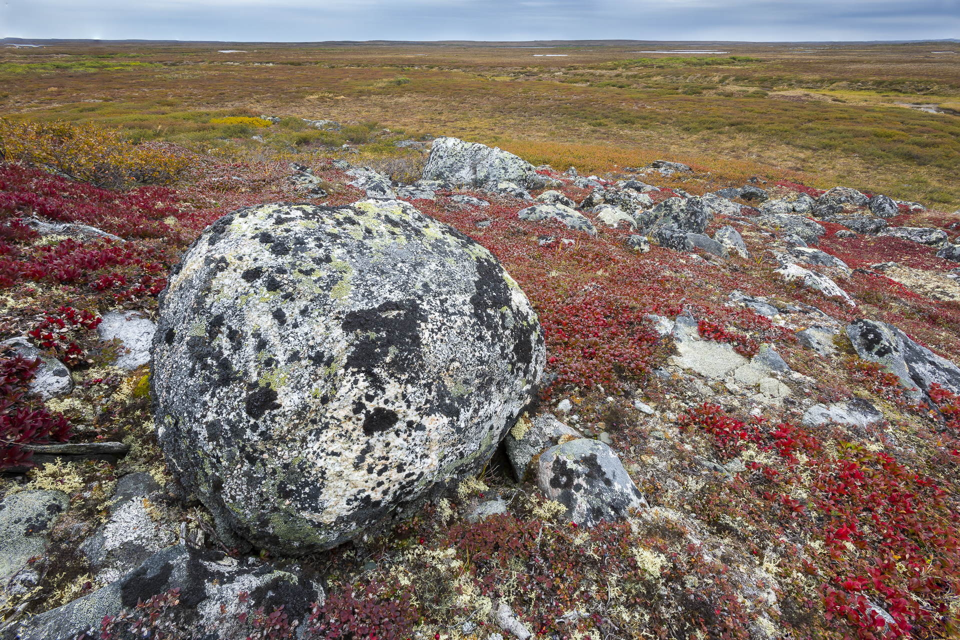 Glacial boulder on Arctic tundra: northern Quebec