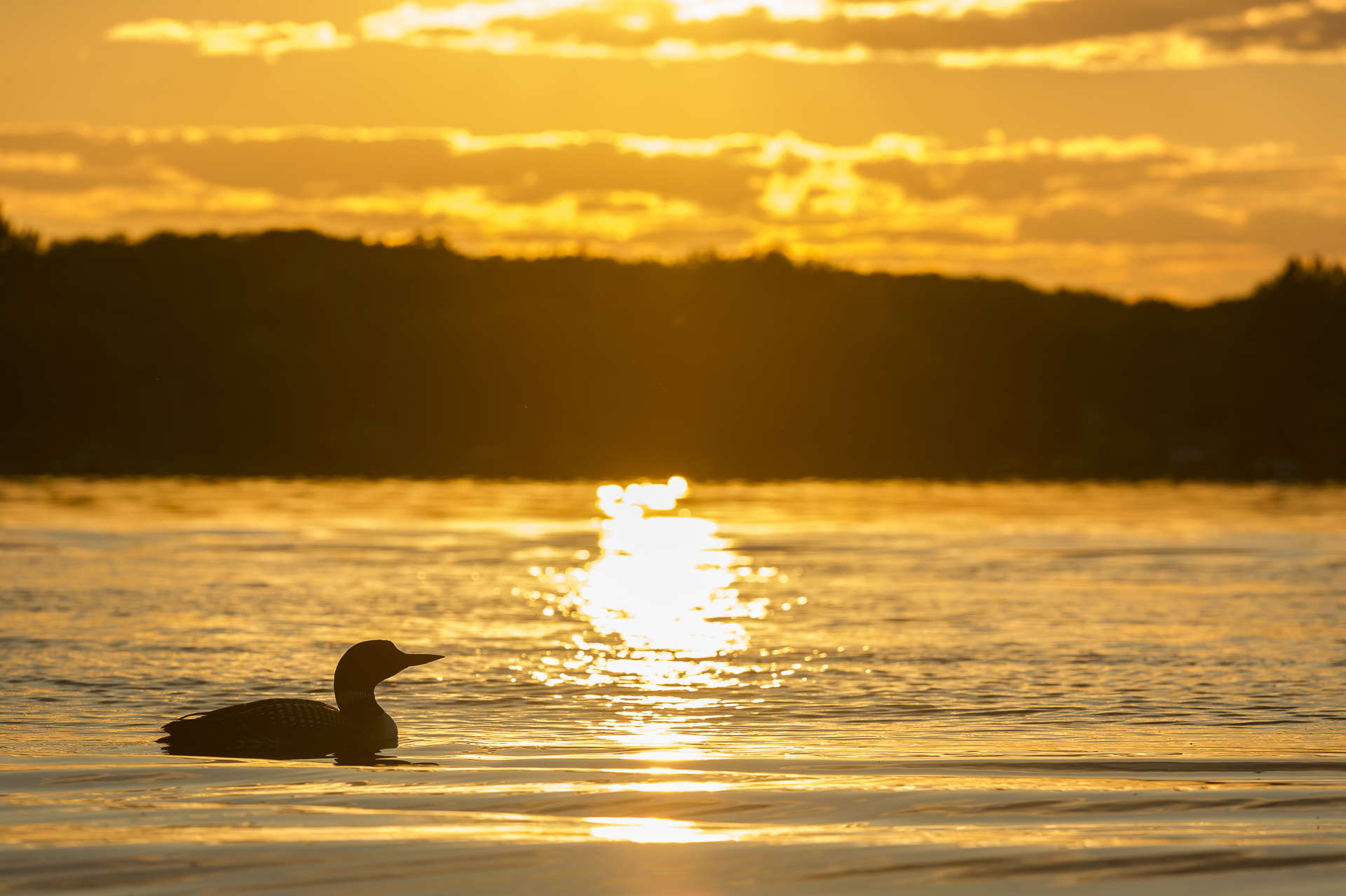 Loon sunset