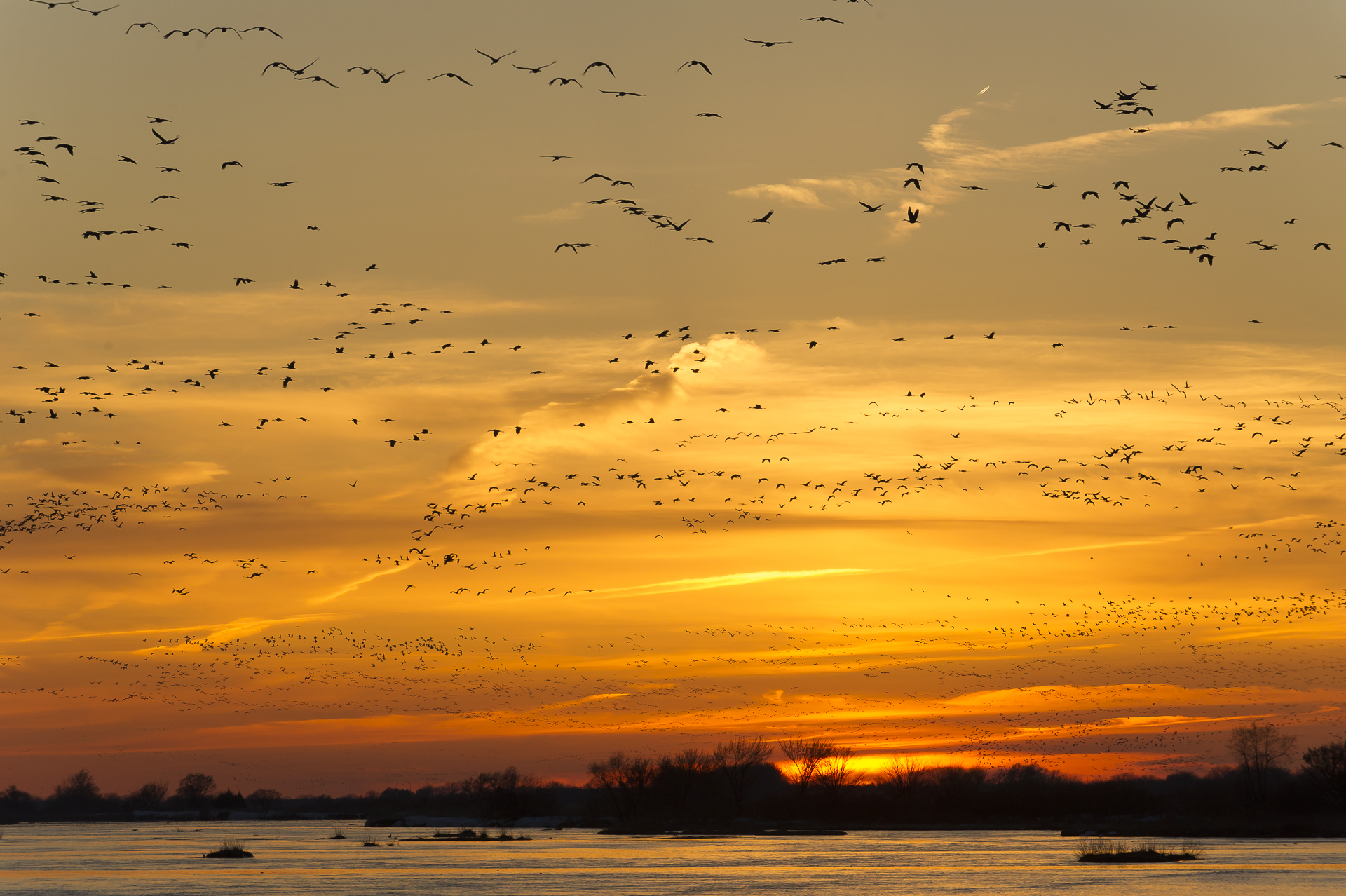 Crowded skies: cranes coming down to roost on the Platte River