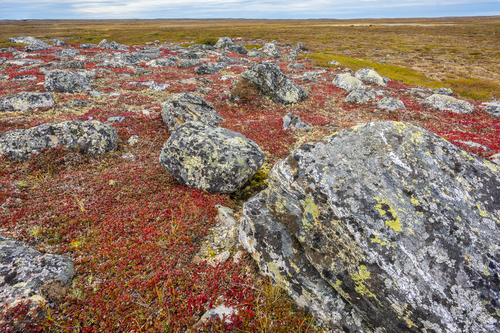 Arctic tundra in fall colors. Nunavik region, Canada.