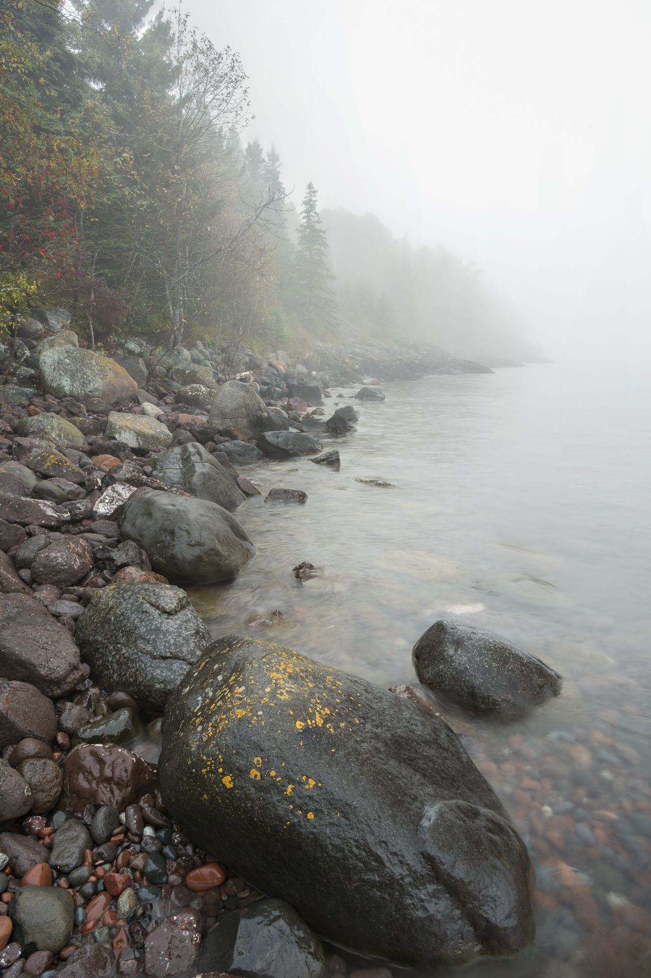 Foggy shoreline: Sugarloaf Cove.