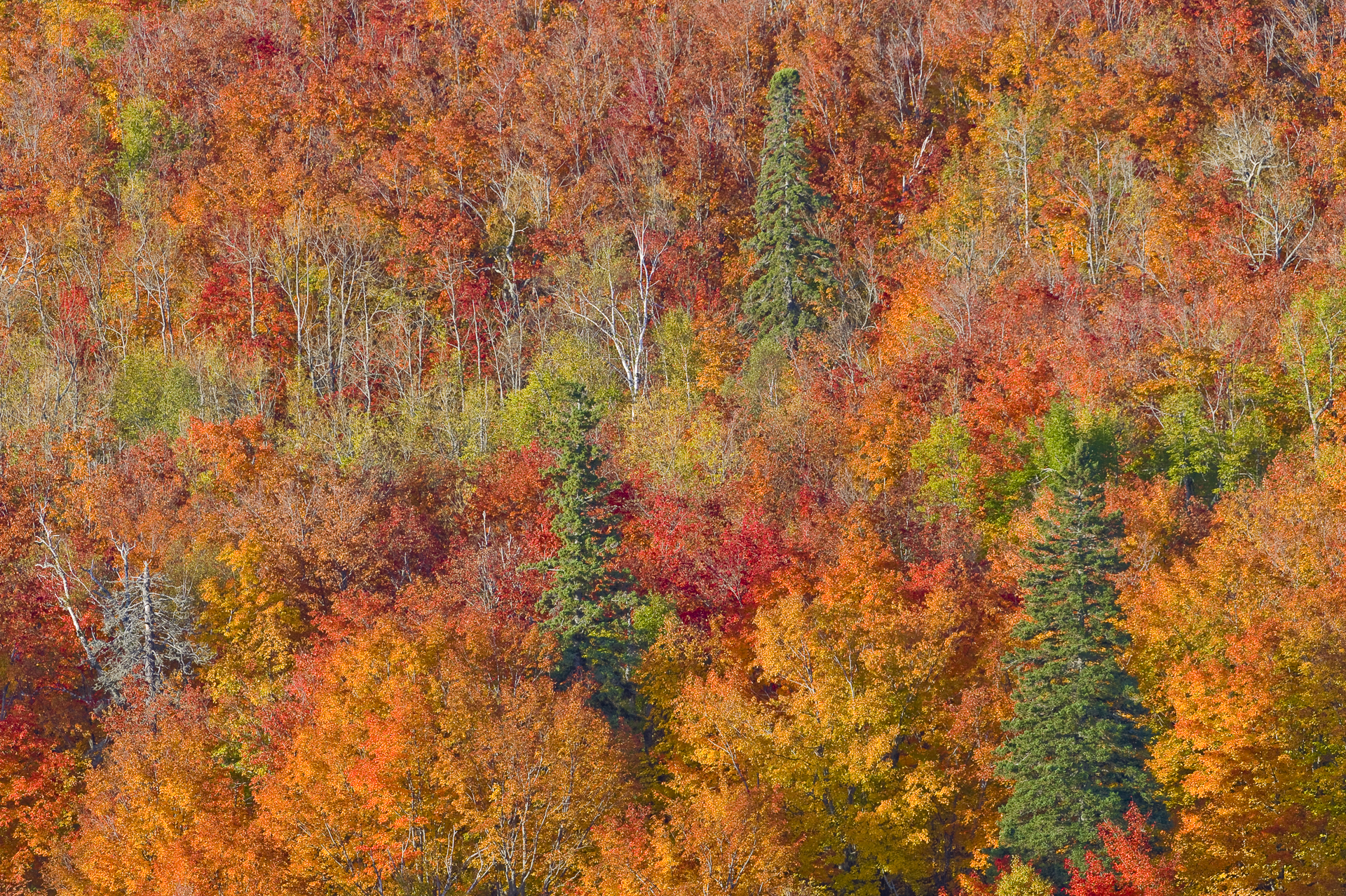 Fall color display from Oberg Mountain