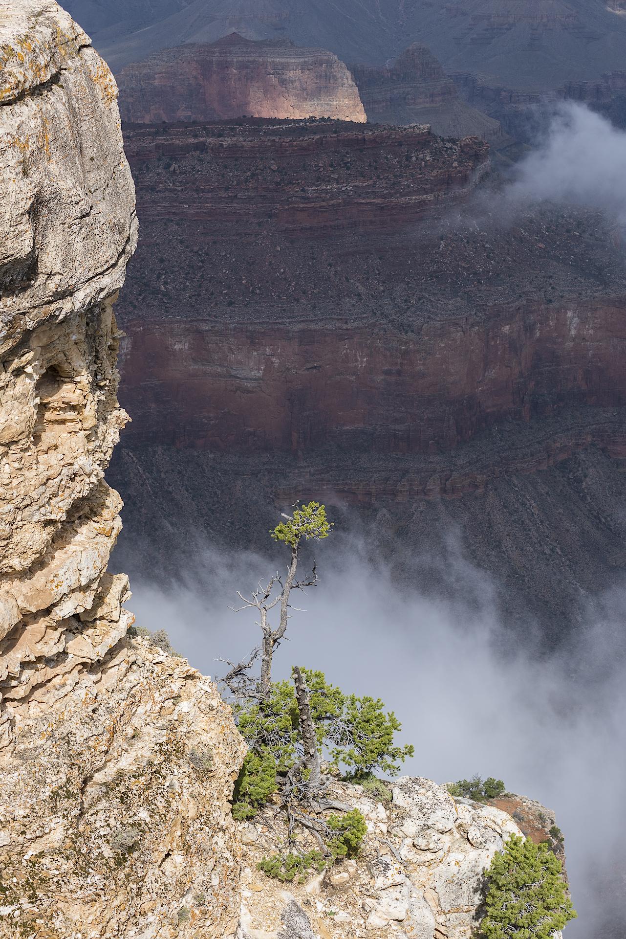 Lone juniper: Grand Canyon NP, AZ