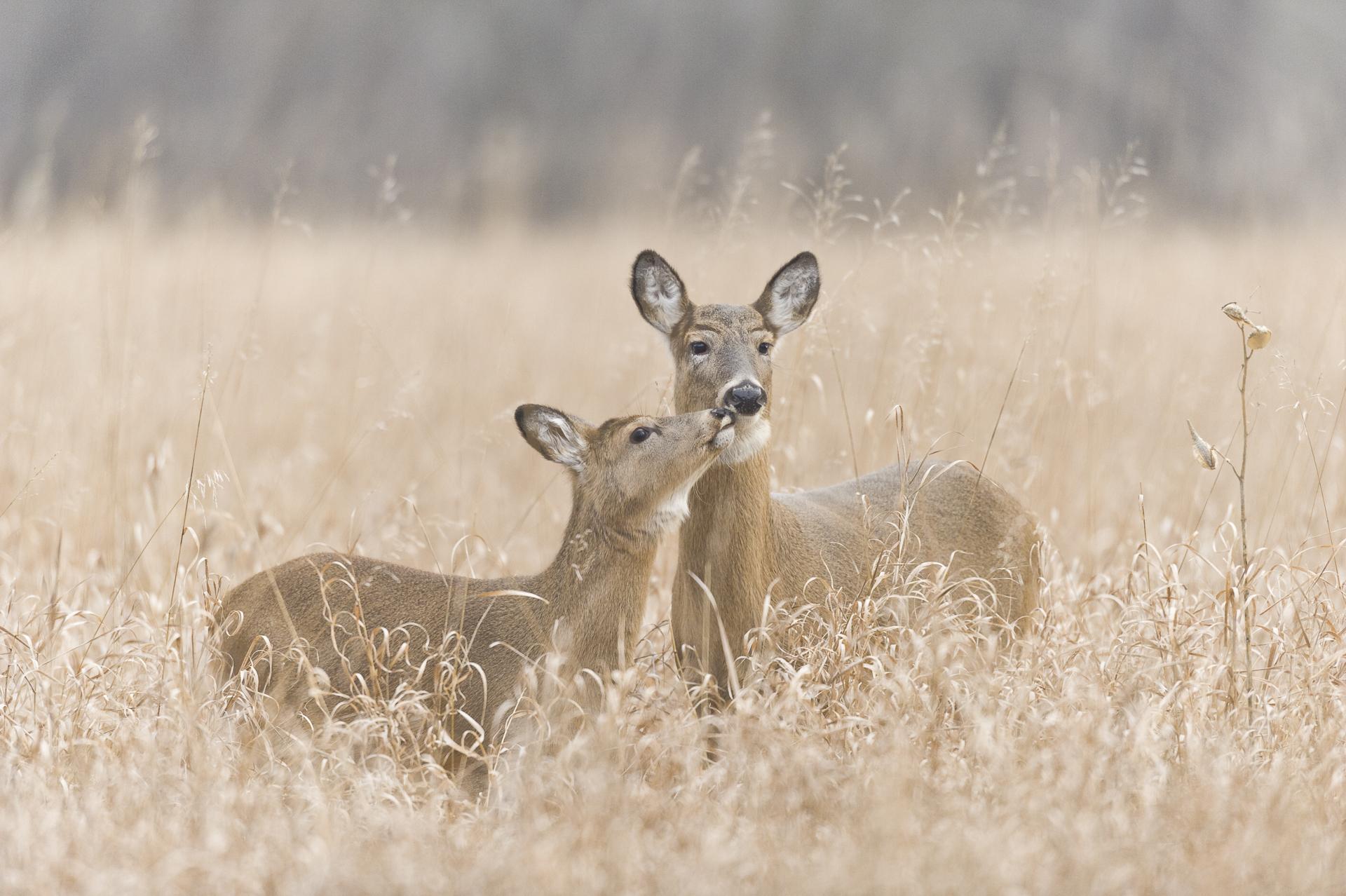 tender moment
