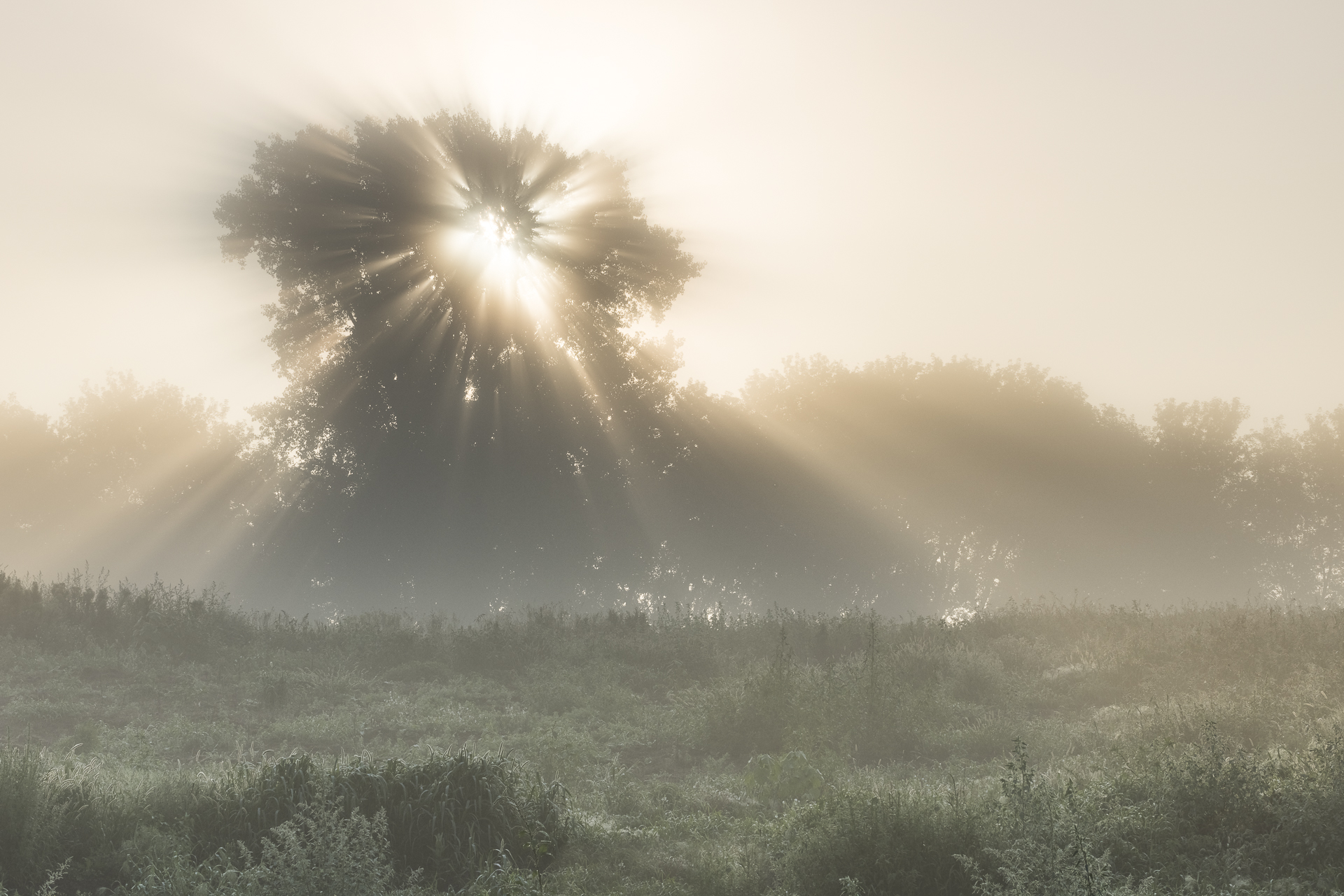 Glorious sunrise! Whitetail Woods Regional Park, MN.