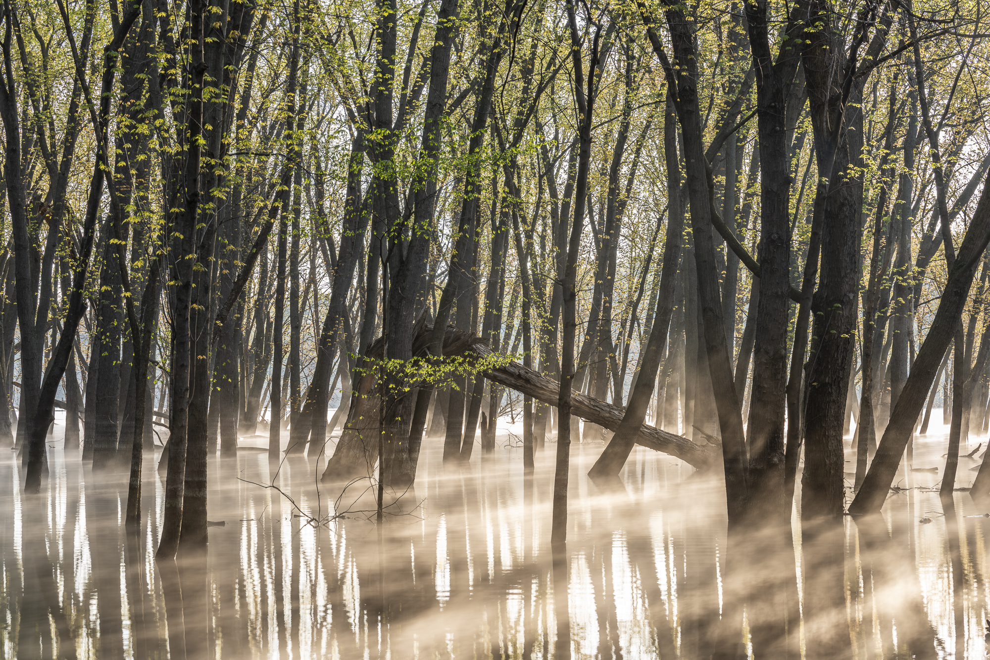 Flooded St. Croix River bottoms