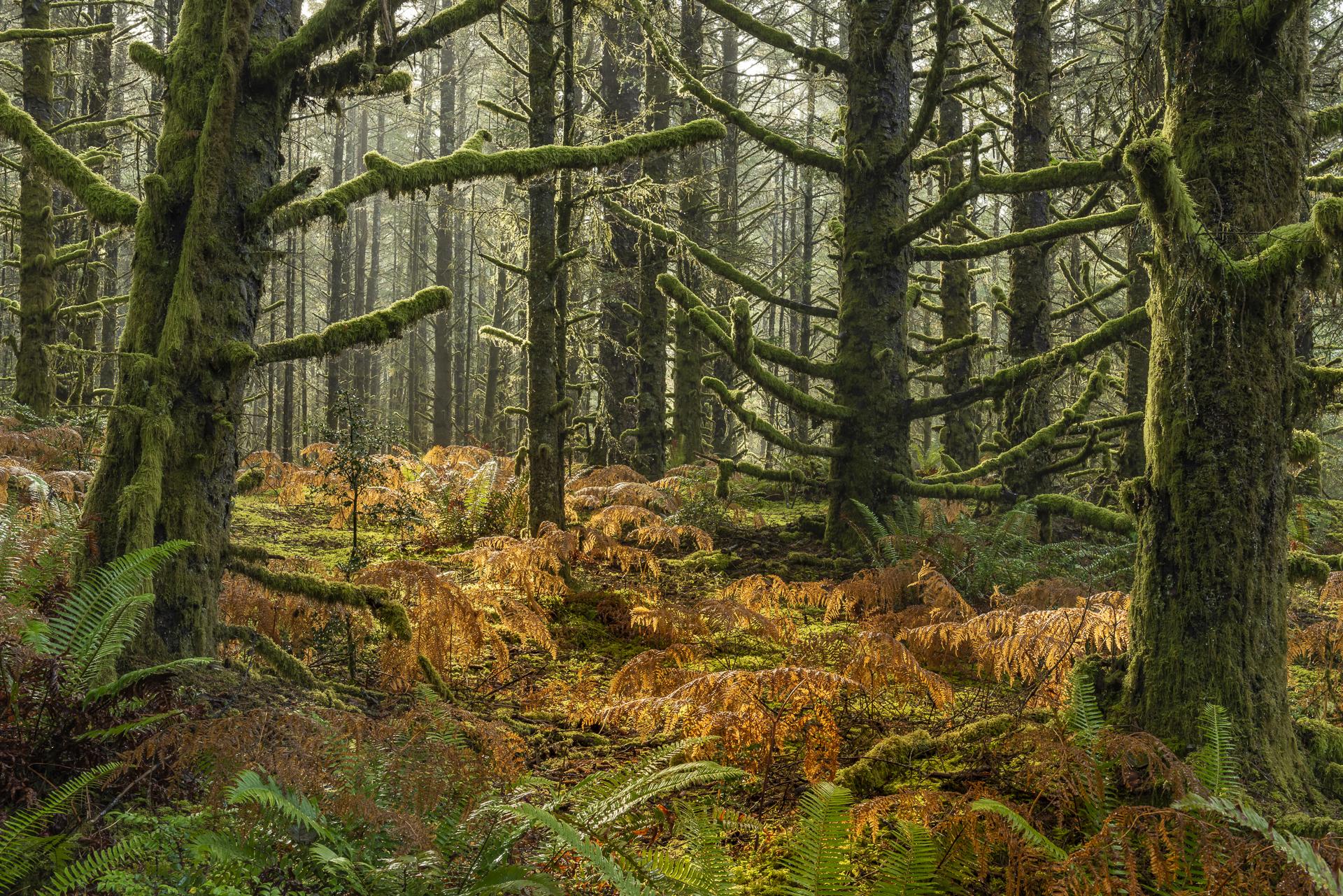 Rainforest, Fort Stevens State Park