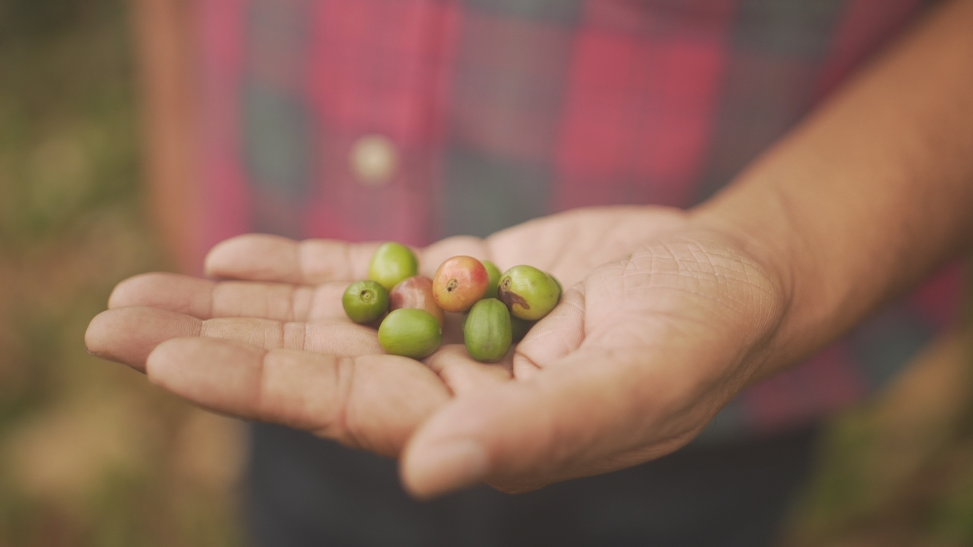Hand Holding Cherrys.jpg