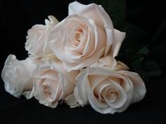 White roses resized.jpg