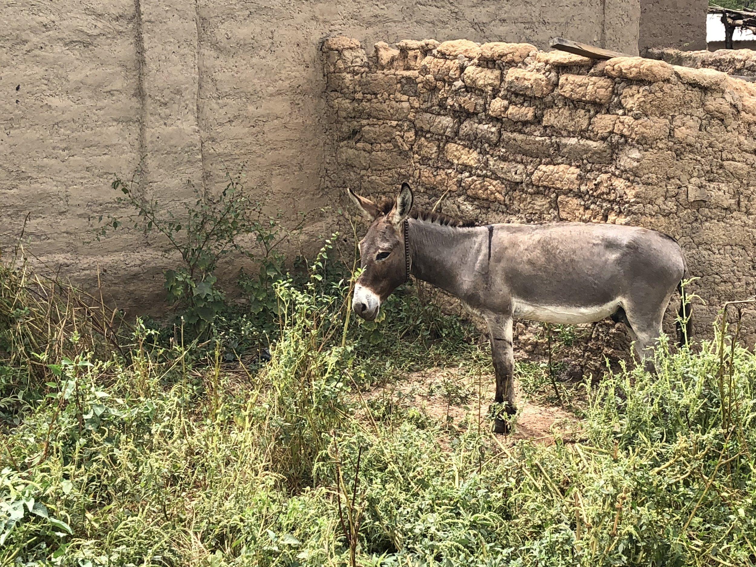 Donkeys everywhere.