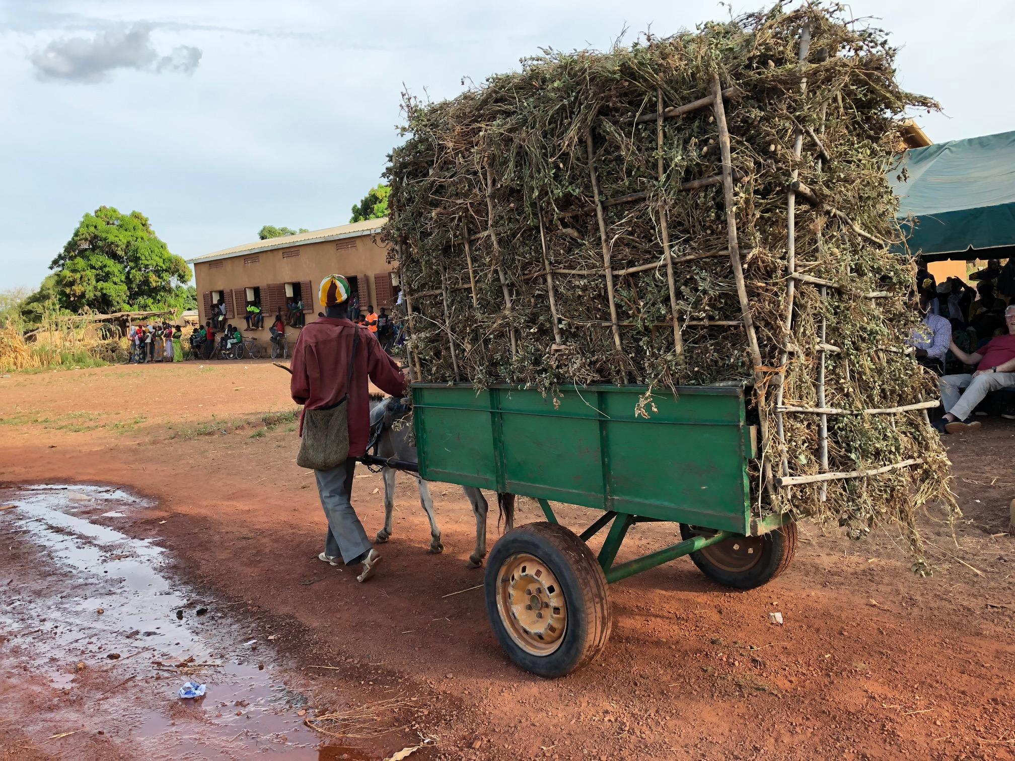 Donkeys do so much work in Mali.