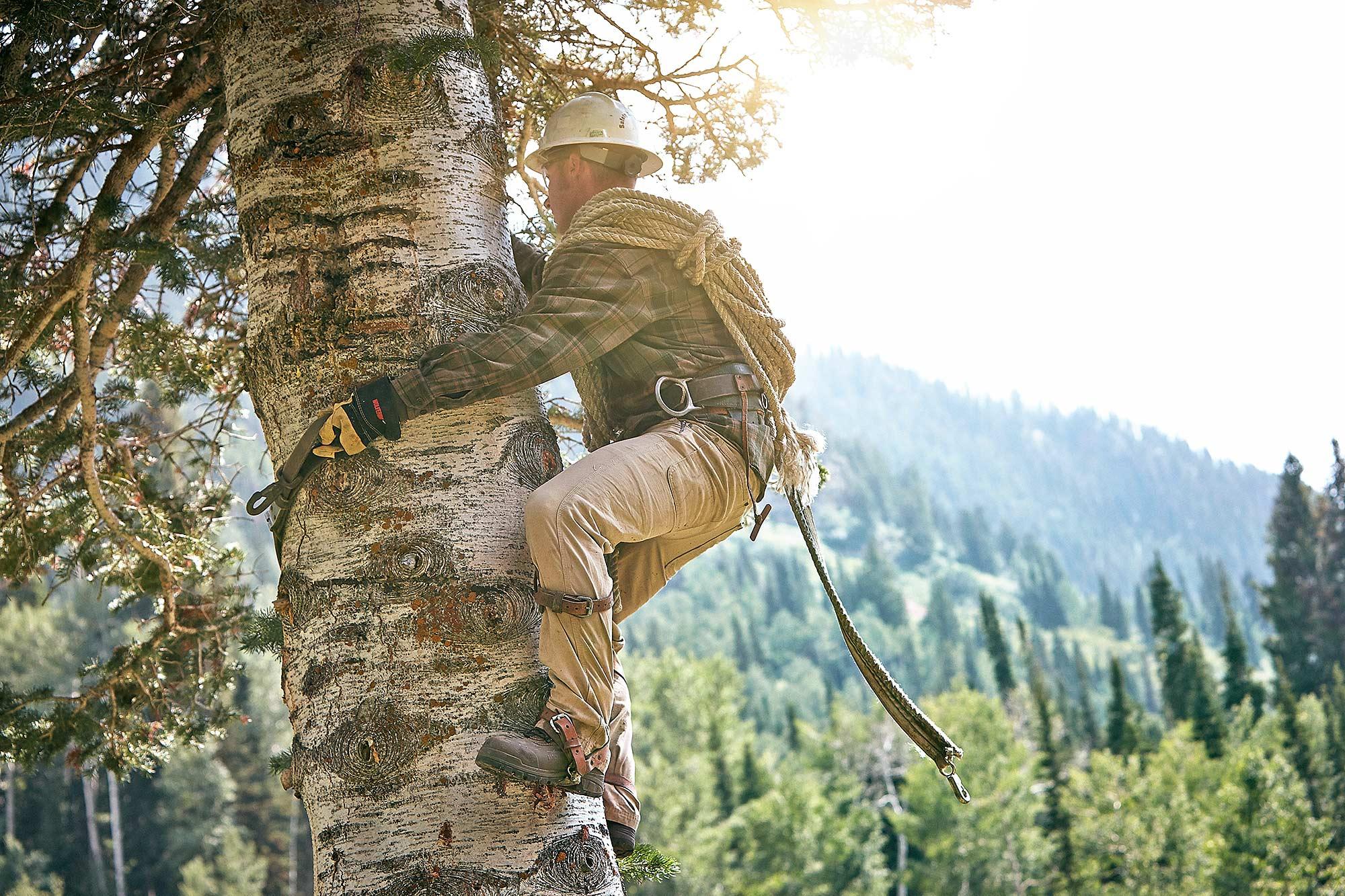 tree-climbing-Utah-Forestry-jeremy-frechette_HP.jpg