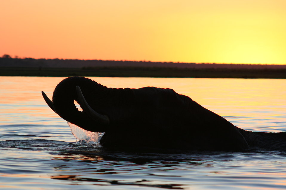 10014-silhouette-of-an-elephant-at-sunset-pv.jpg