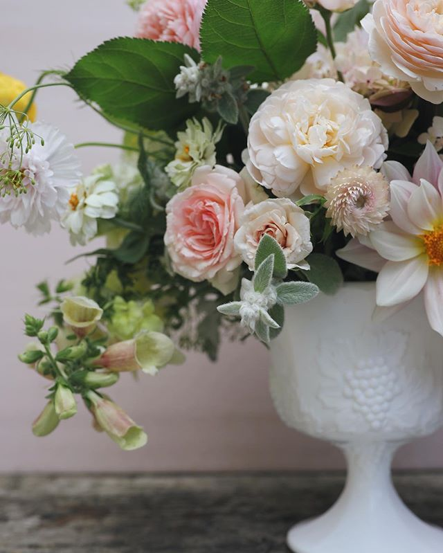 "Little strawflower says ""hey"". 📷:@josiepayne  #flowerpower #weddinginspo #flowermagic #pink#dspink#flowerstagram #instablooms #seasonalfloweralliance #growfloret#imsomartha #marthablooms #davidaustinroses #gardengathered #slowflowers #seasonalfloweralliance #gardentovase #underthefloralspell #inspiredbypetals #everydayibt #sobridaltheory #pursuepretty #beautifulblooms #vscoflowers #flowerlove #gardens #gardenstyle #stylemepretty #theknot"