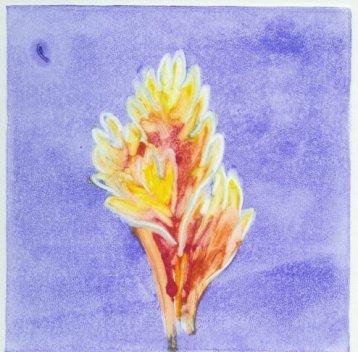 Big Island Flower