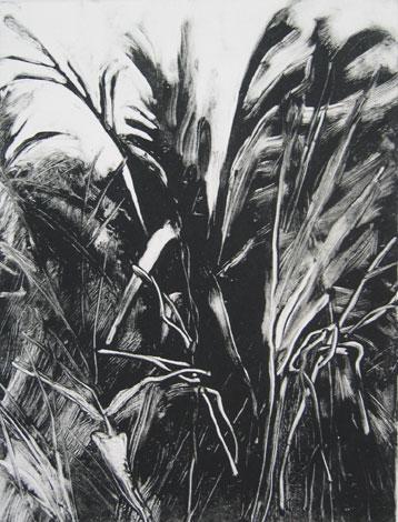 Palm, St. Barths