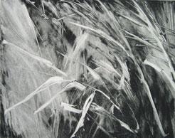 Reeds  , Fishers Island, NY