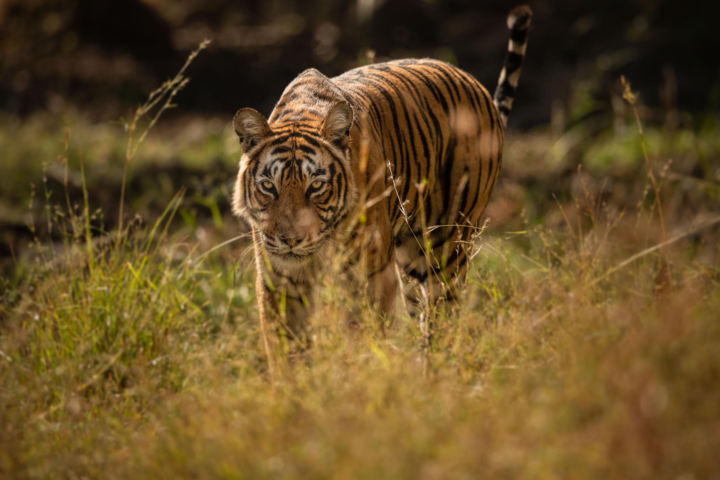 yorkshire_wildlife_photographer-2.jpg