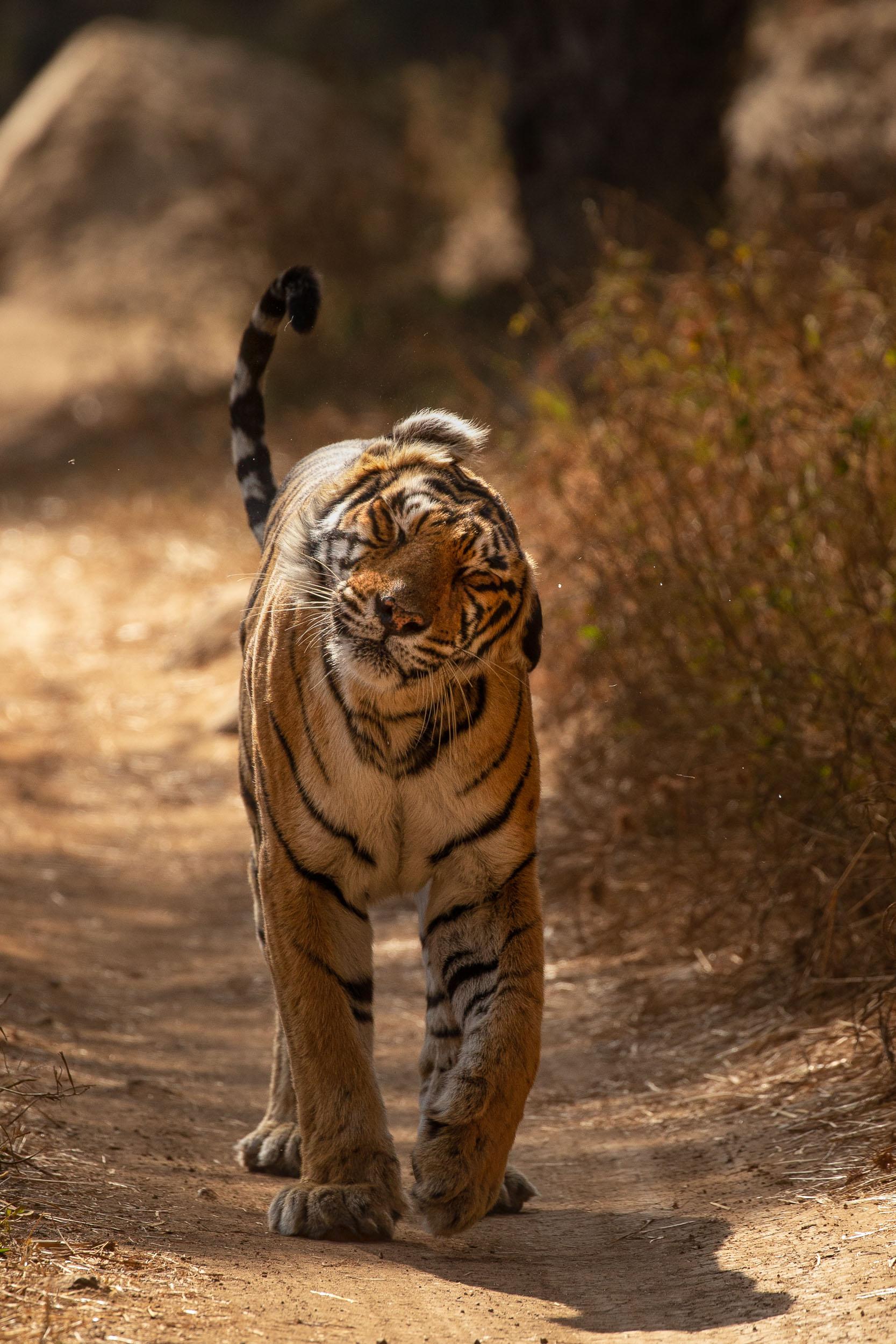 yorkshire_wildlife_photographer-6.jpg
