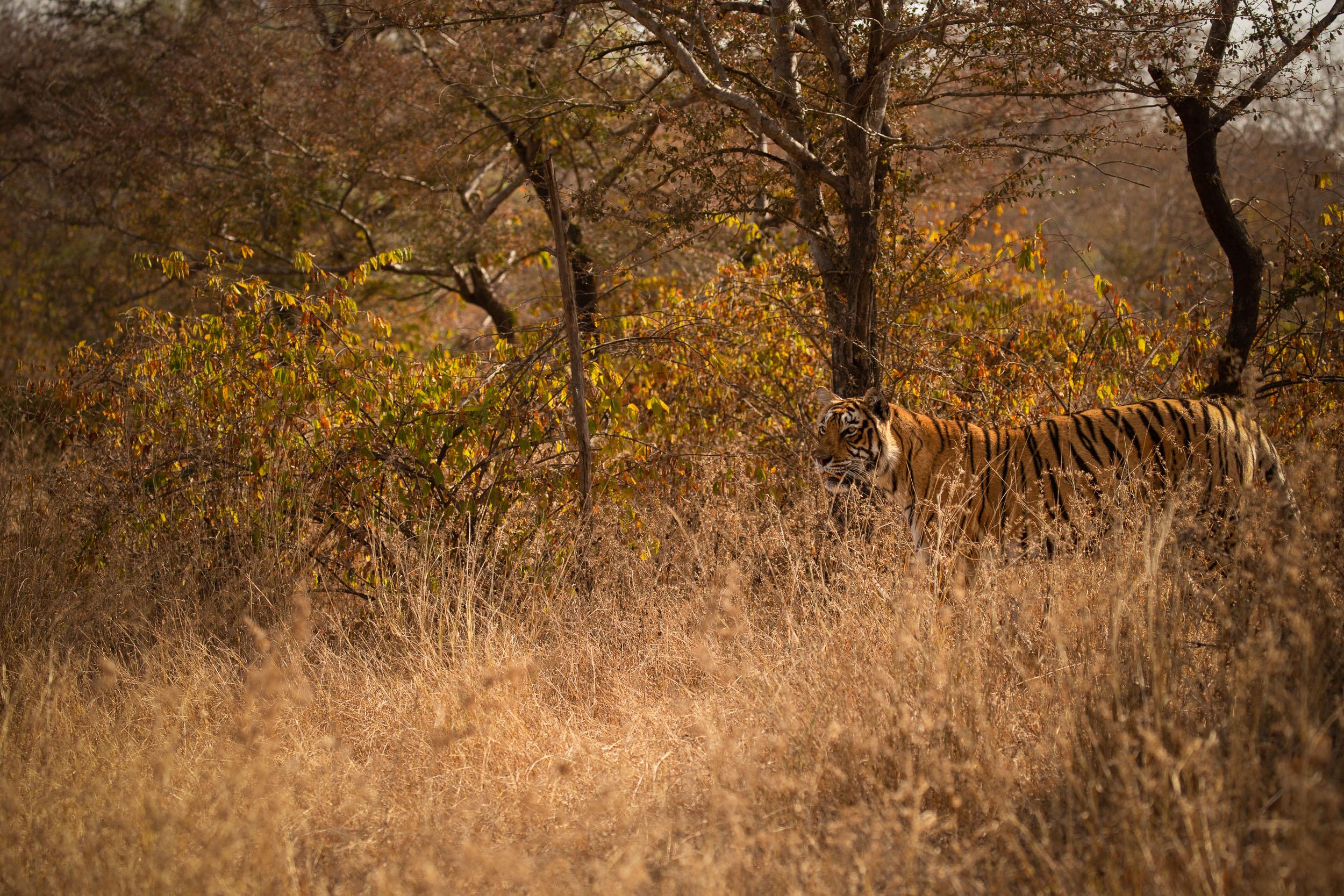 yorkshire_wildlife_photographer-8.jpg