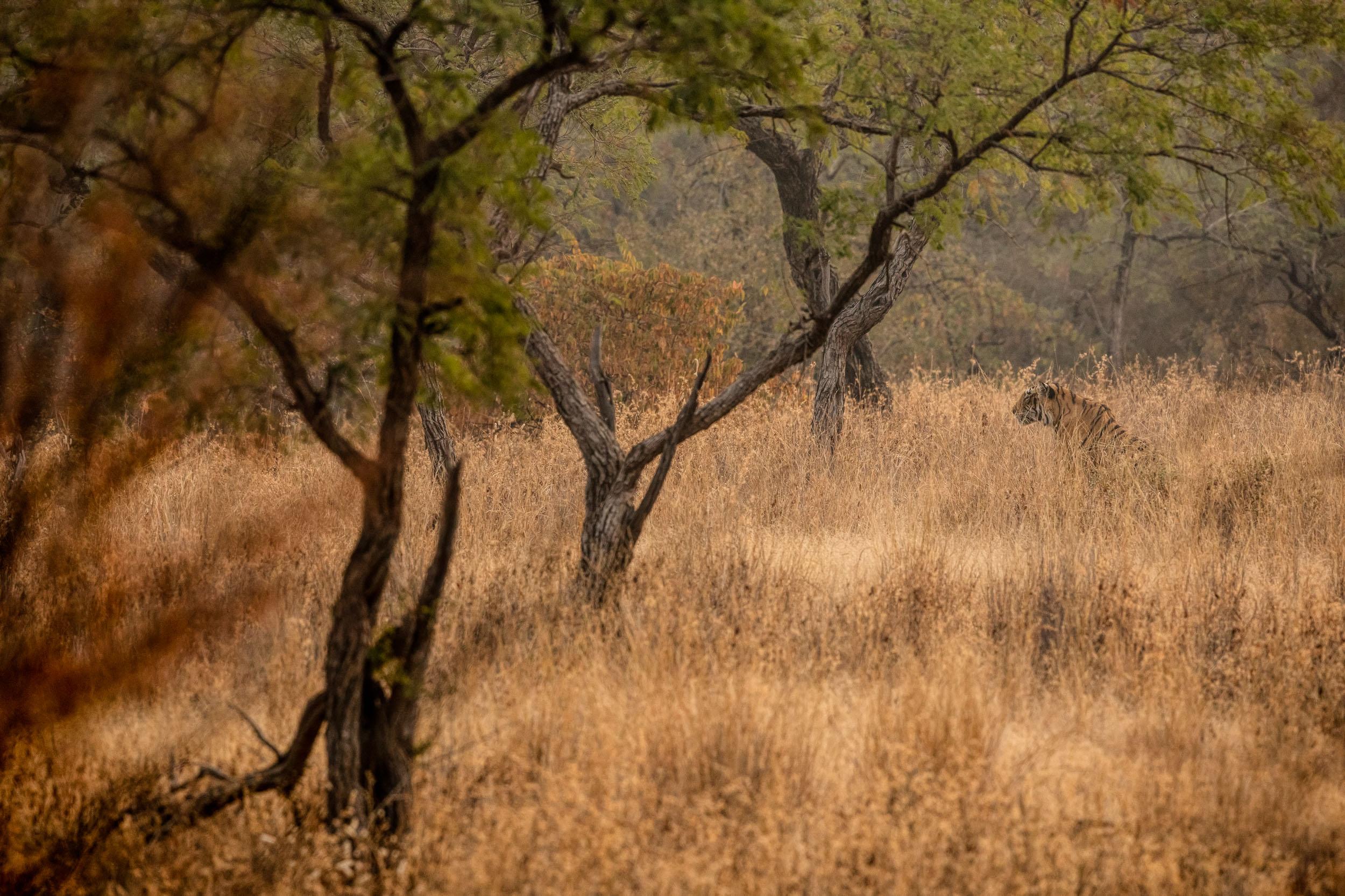 yorkshire_wildlife_photographer-13.jpg