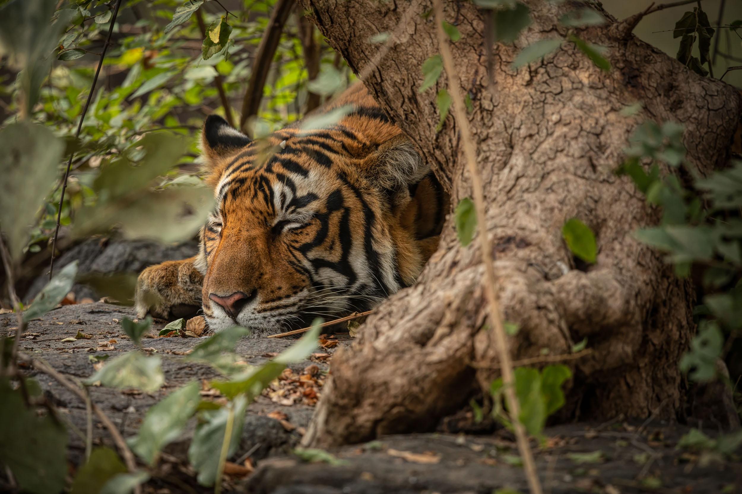 yorkshire_wildlife_photographer-16.jpg