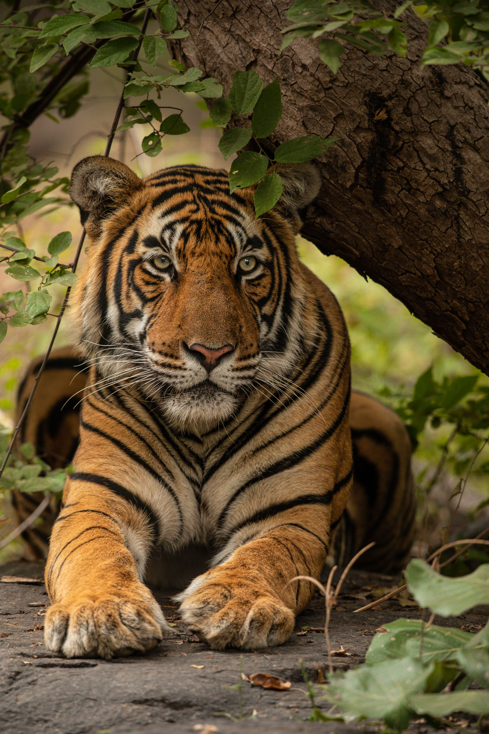 yorkshire_wildlife_photographer-17.jpg