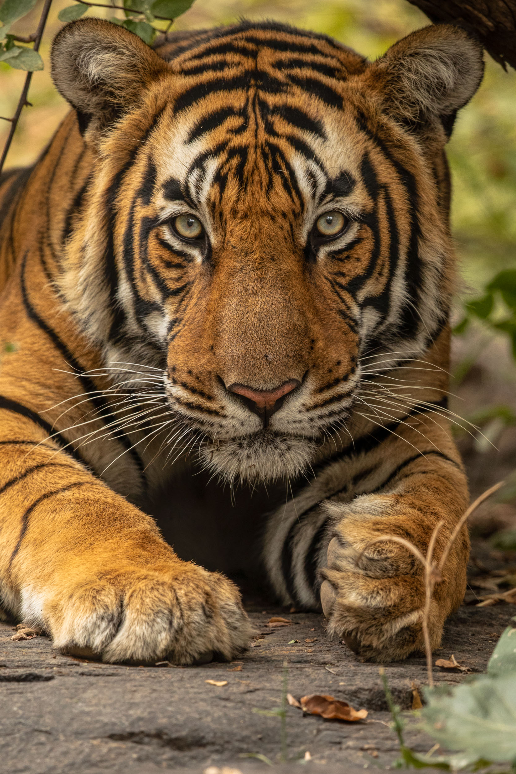 yorkshire_wildlife_photographer-20.jpg