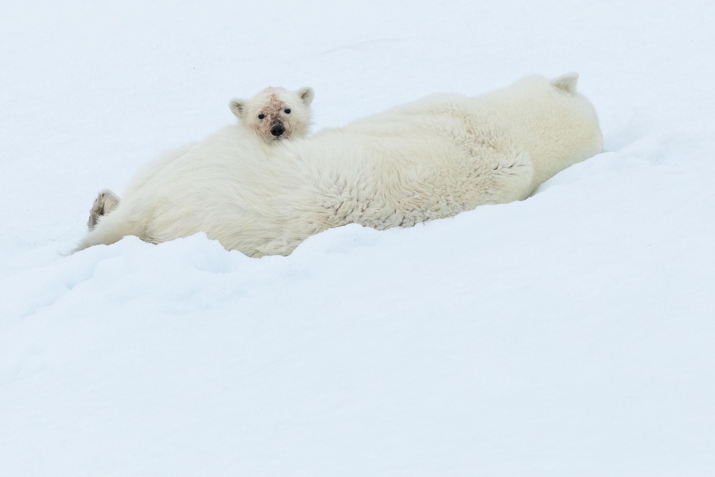 yorkshire_wildlife_photographer-333.jpg