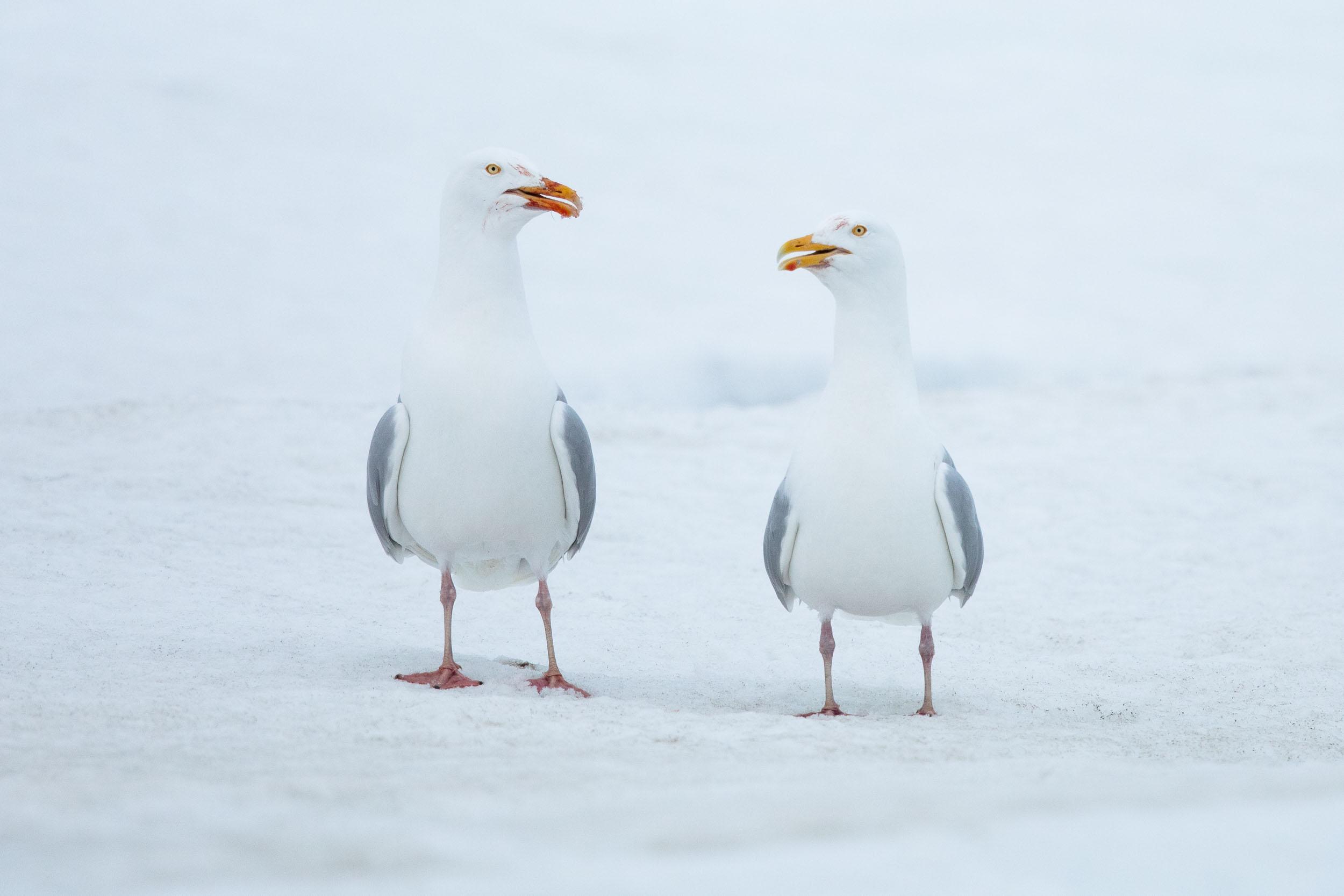 yorkshire_wildlife_photographer-342.jpg