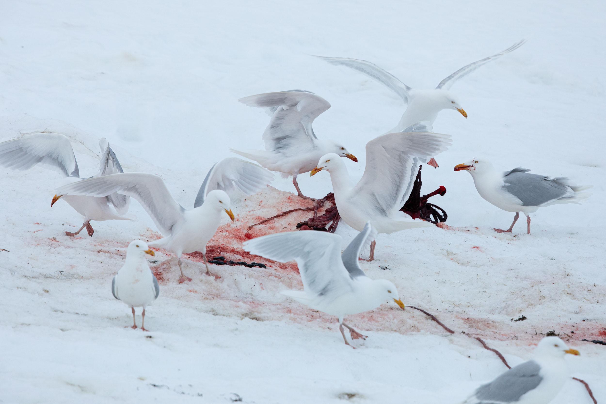 yorkshire_wildlife_photographer-338.jpg