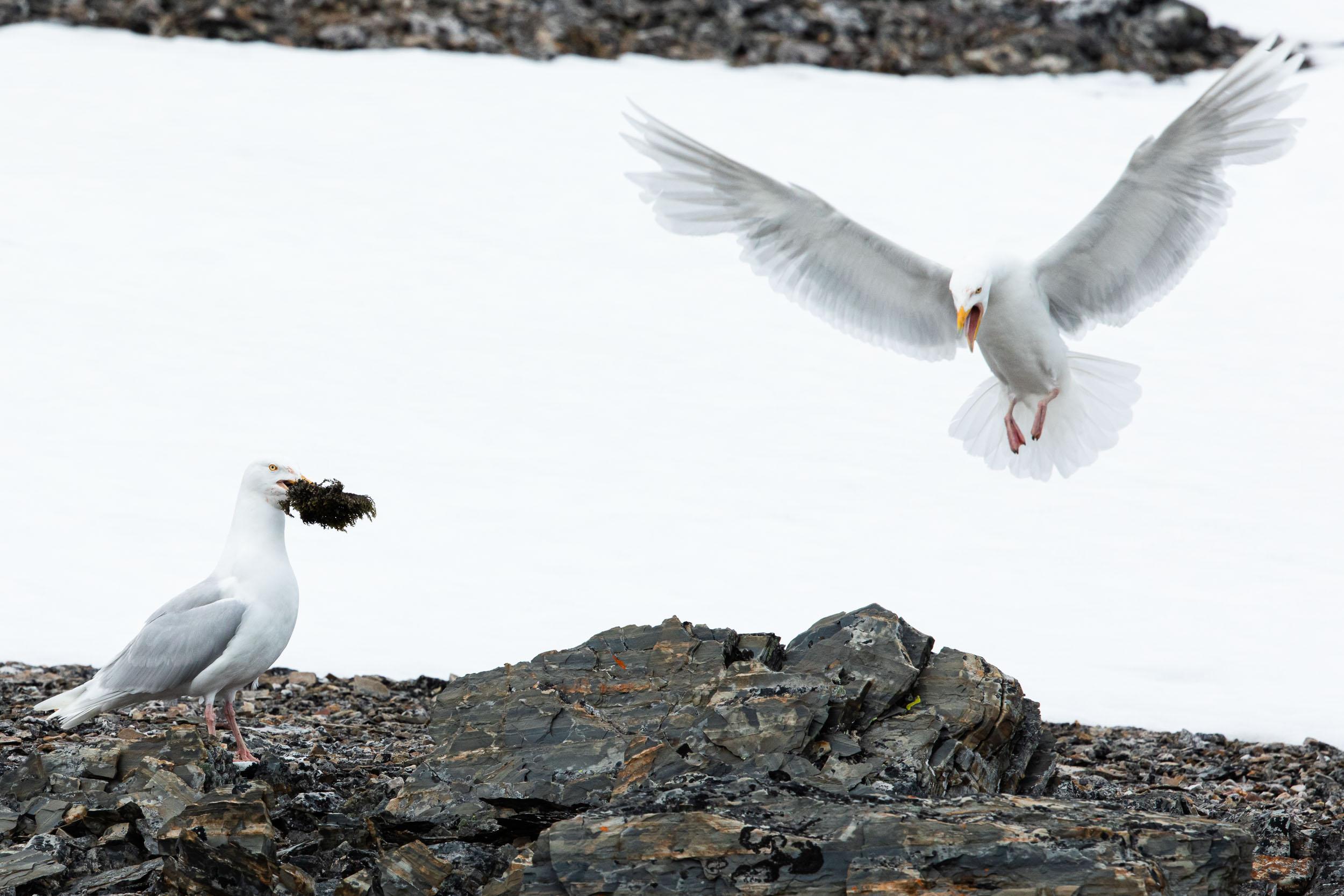 yorkshire_wildlife_photographer-346.jpg