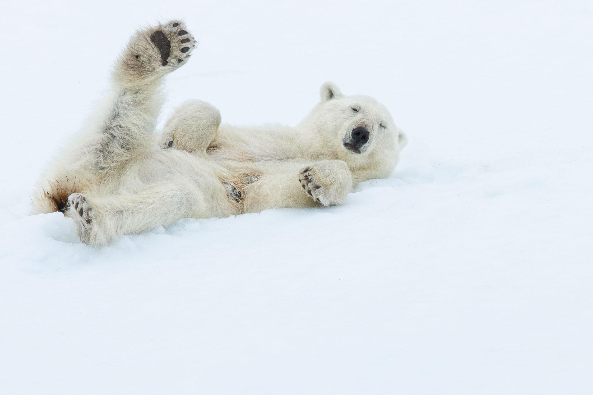 yorkshire_wildlife_photographer-335.jpg