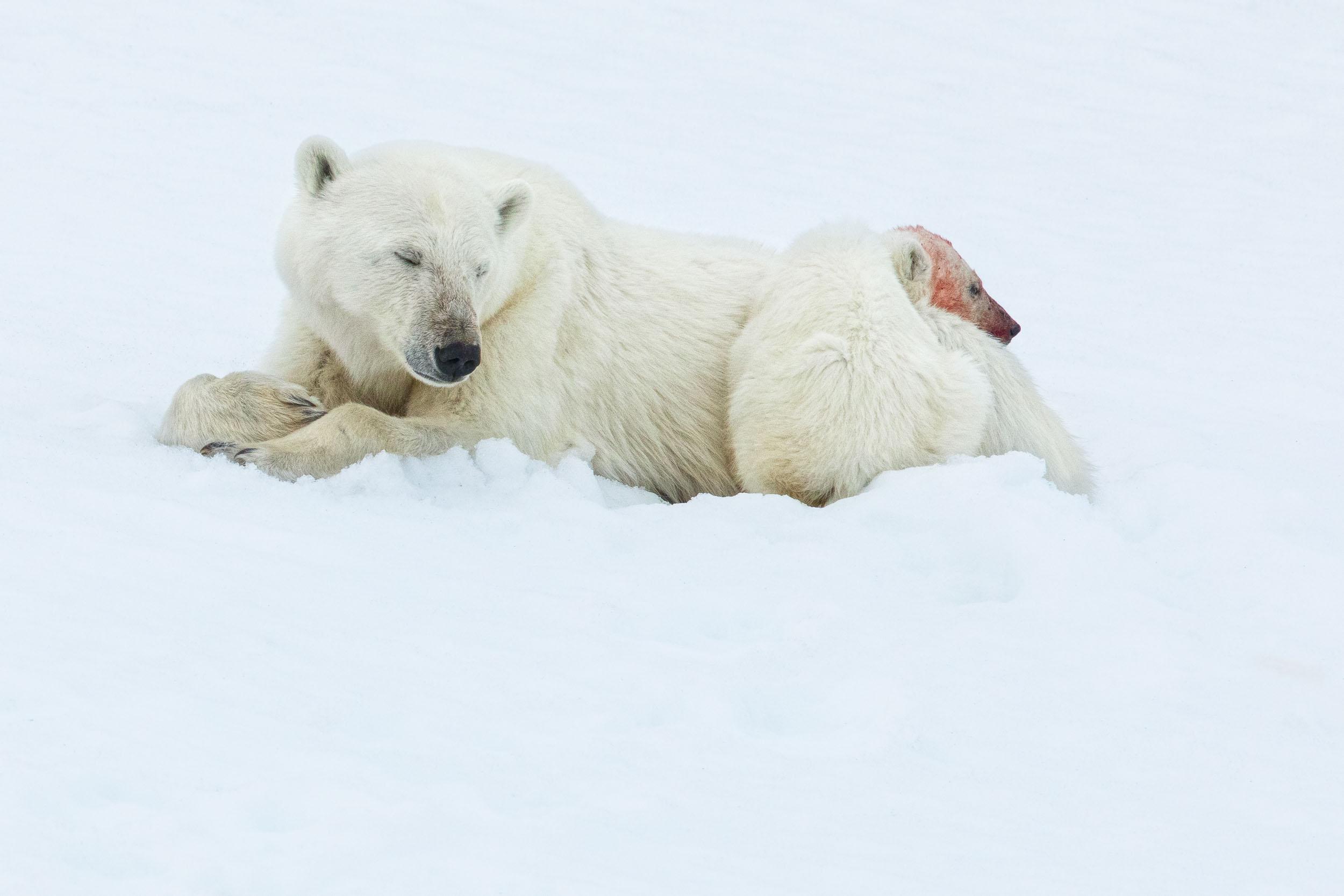 yorkshire_wildlife_photographer-340.jpg
