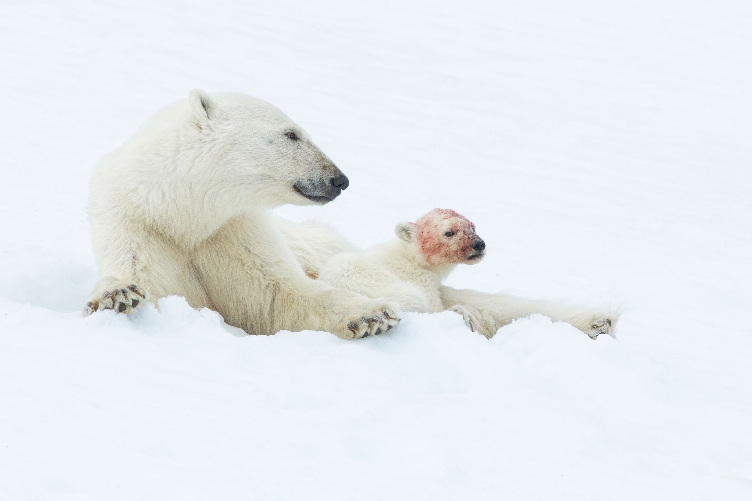yorkshire_wildlife_photographer-347.jpg