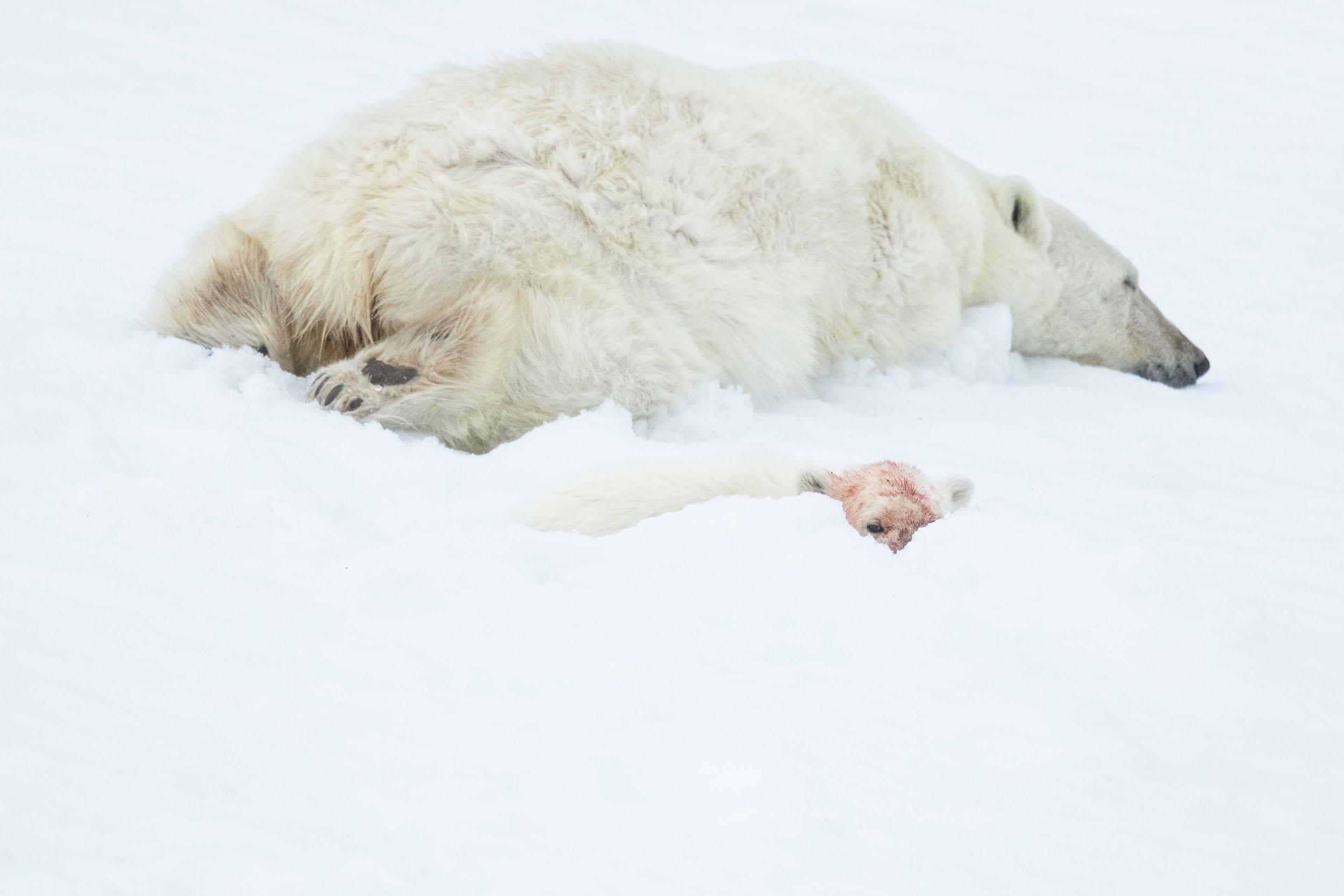 yorkshire_wildlife_photographer-348.jpg