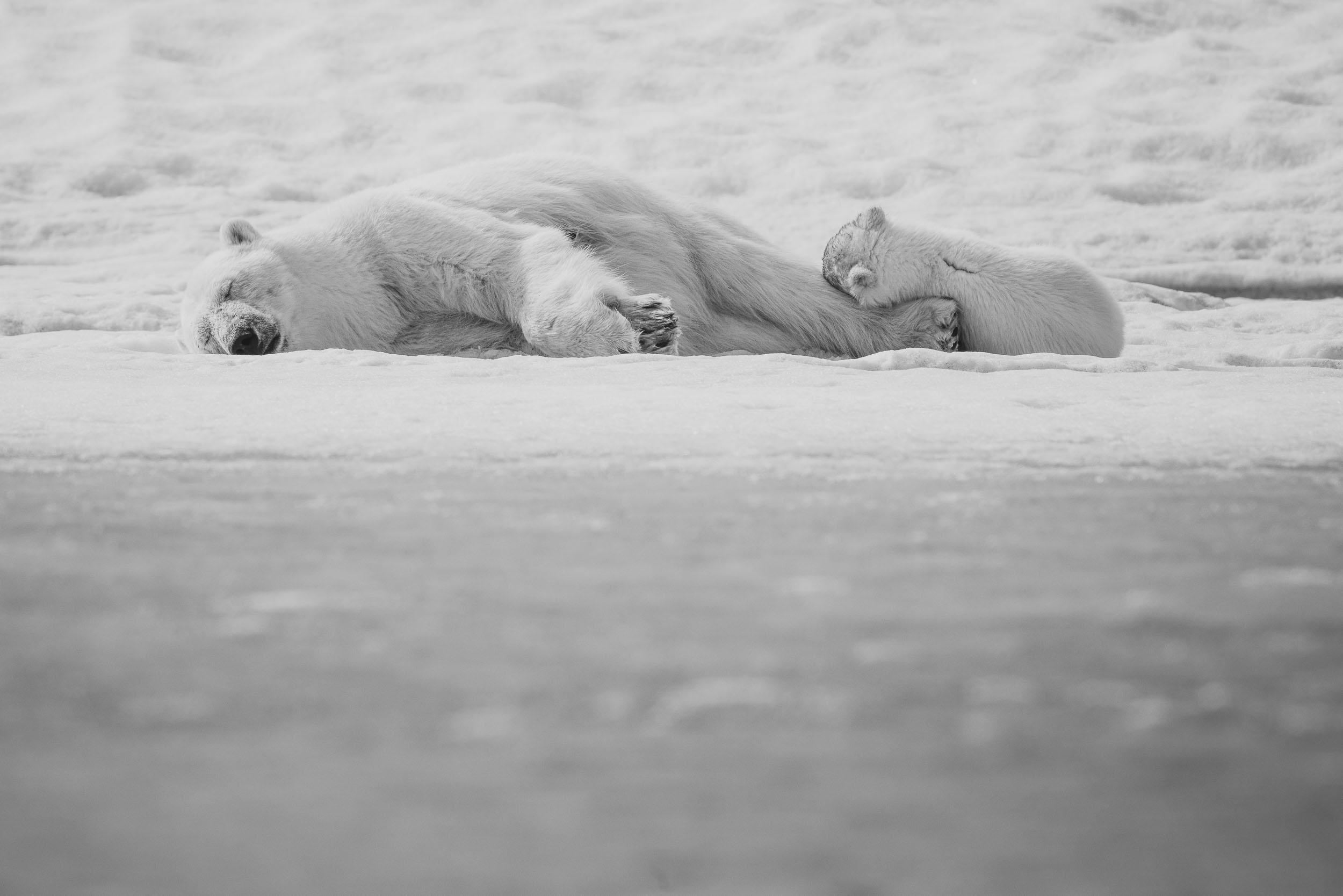 yorkshire_wildlife_photographer-354.jpg