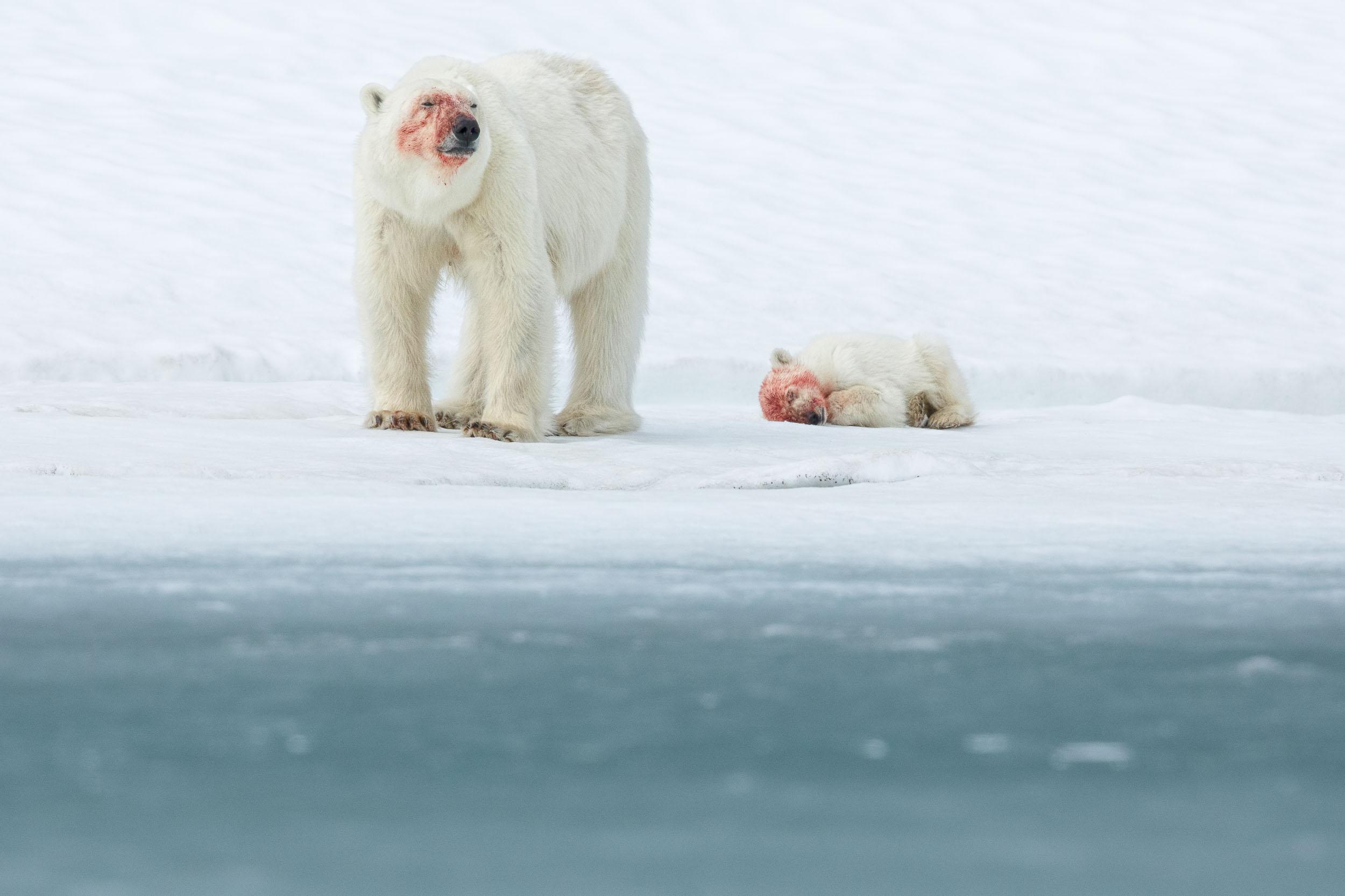 yorkshire_wildlife_photographer-353.jpg