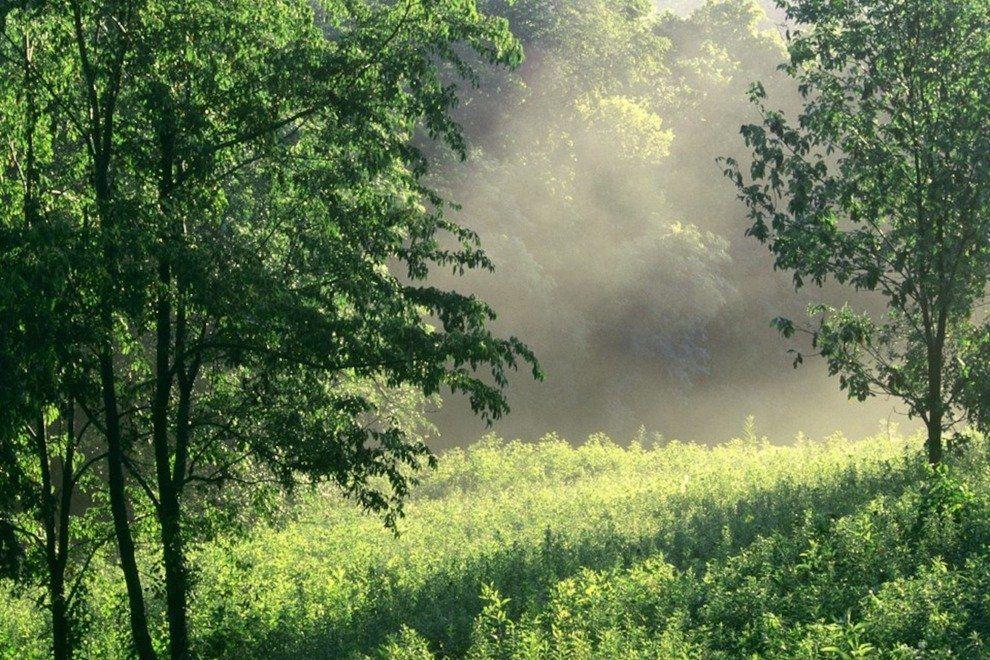 p-Morning-Meadow--Edwin-Warner-Park--Nashville--Tennessee_54_990x660.jpg