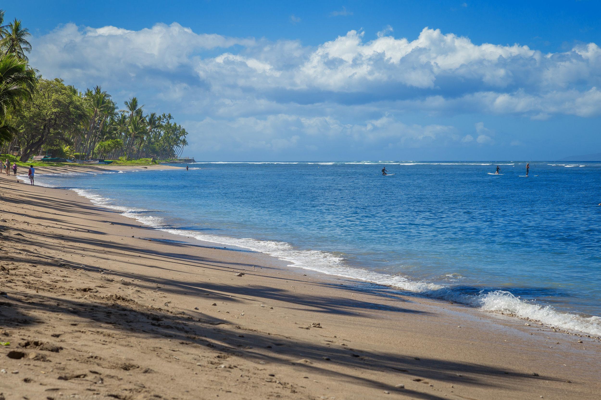 Lahaina ShoresIMG_3361.jpg