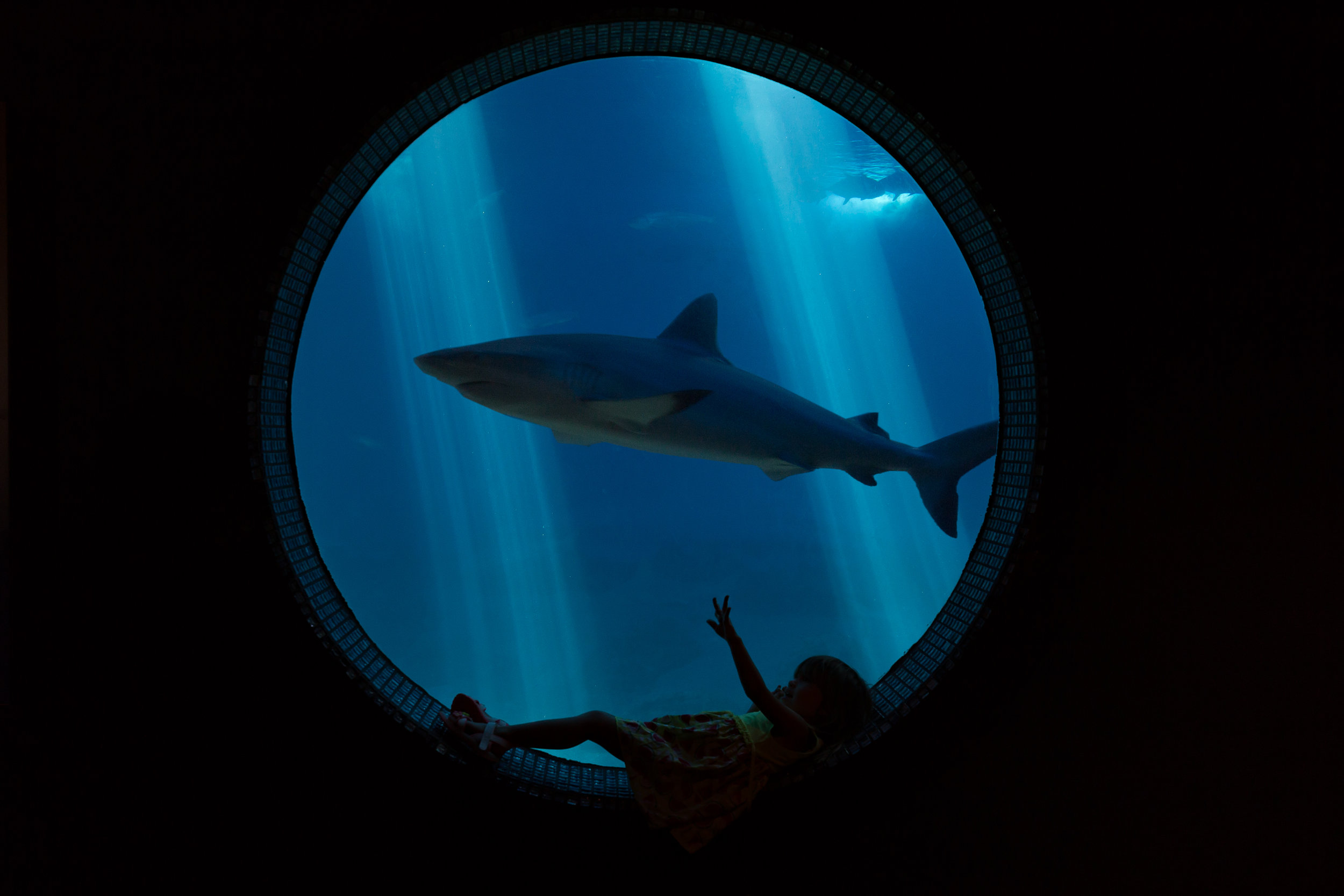 Mini Golf and Aquarium_IMG_5836v2_Shark.jpg