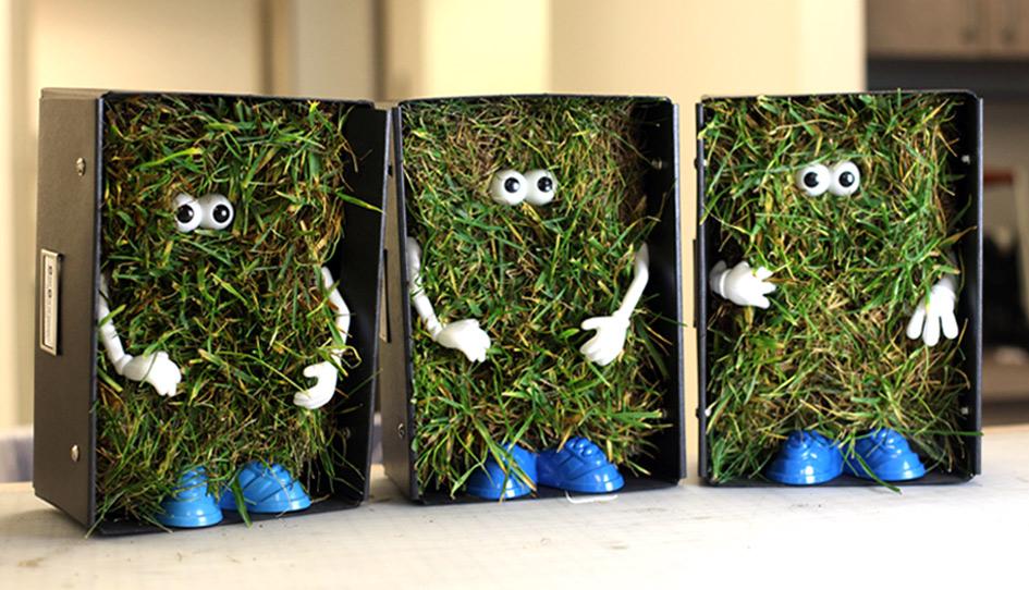C2_grass.jpg
