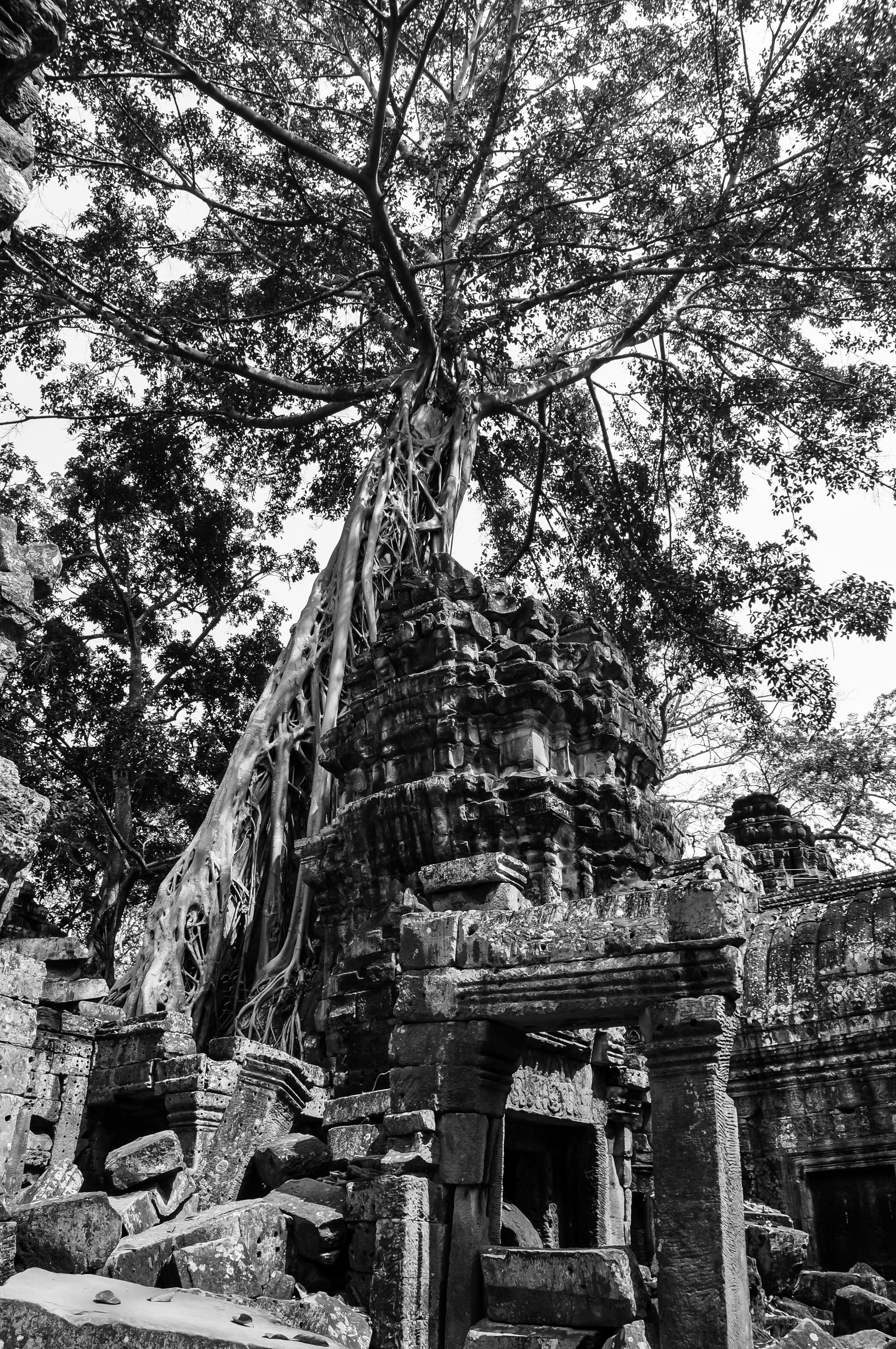 Victorious Nature - Ta Prohm (Cambodia)