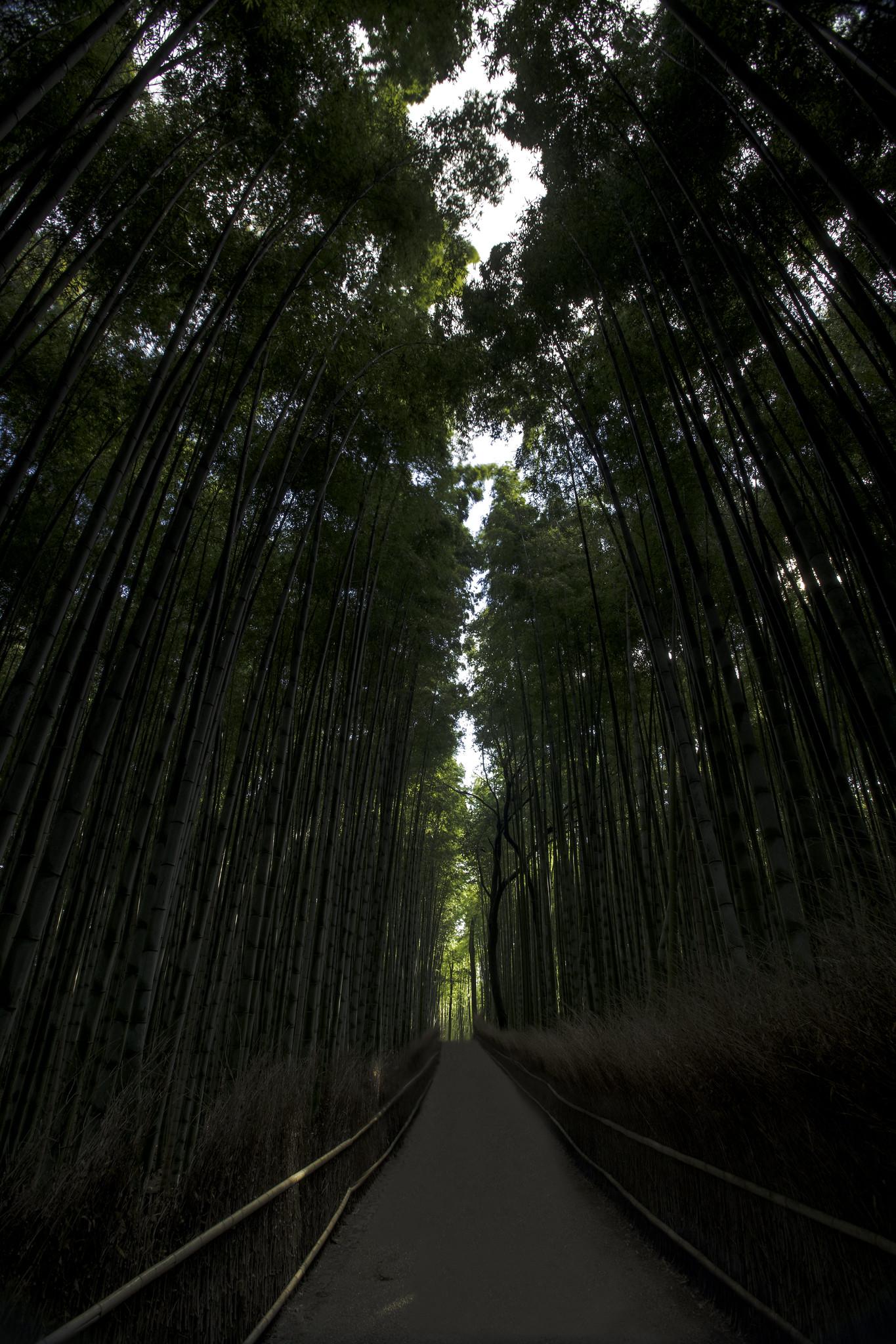 Arashiyama Bamboo Grove - Kyoto