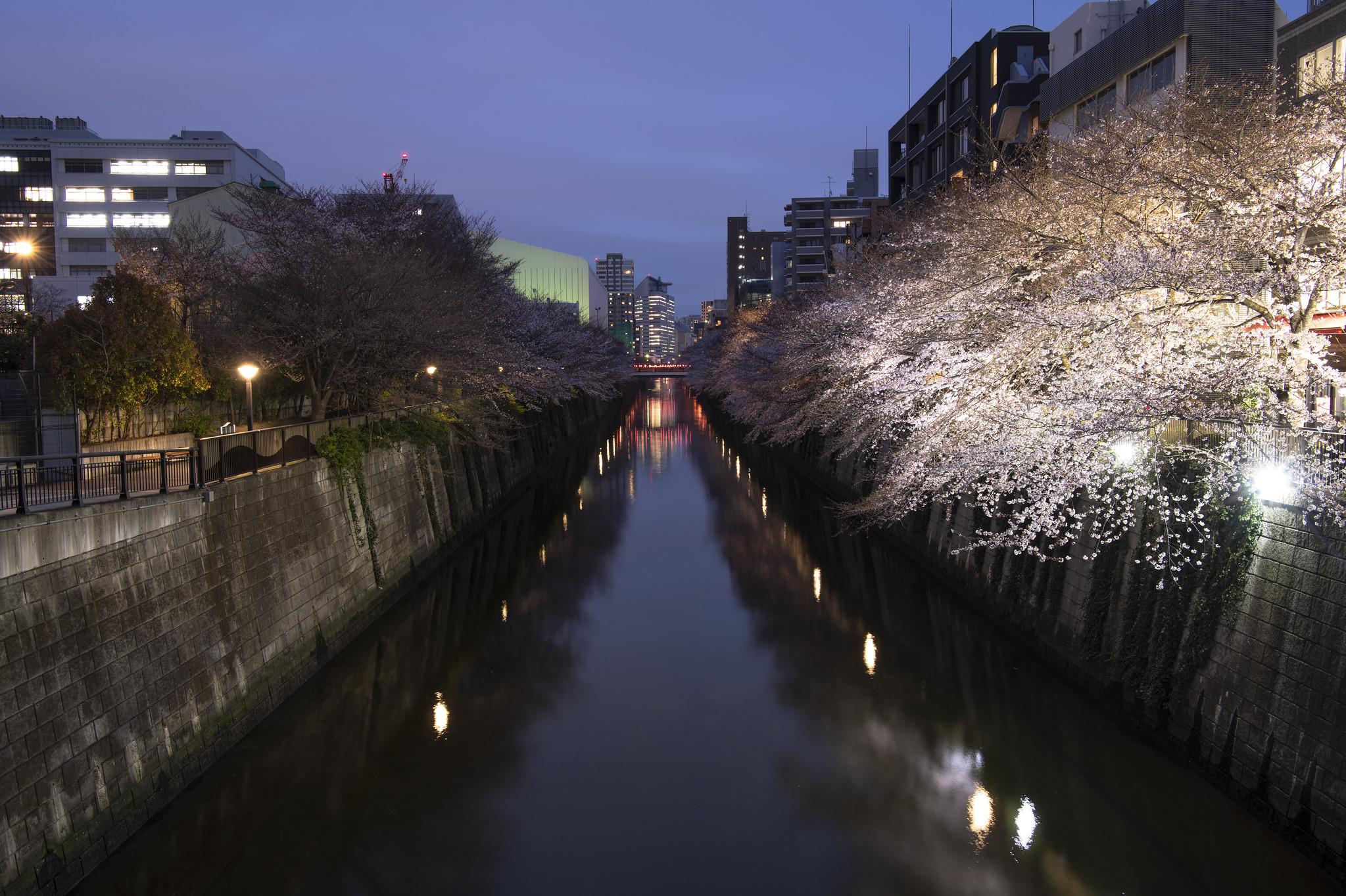 Meguro River - Tokyo