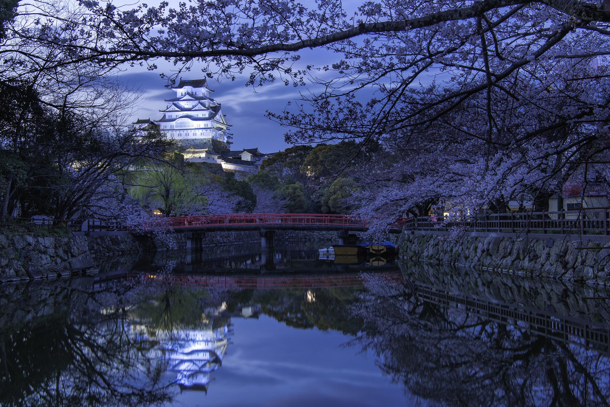 Cherry Blossom Dreams - Himeji Castle (Japan)