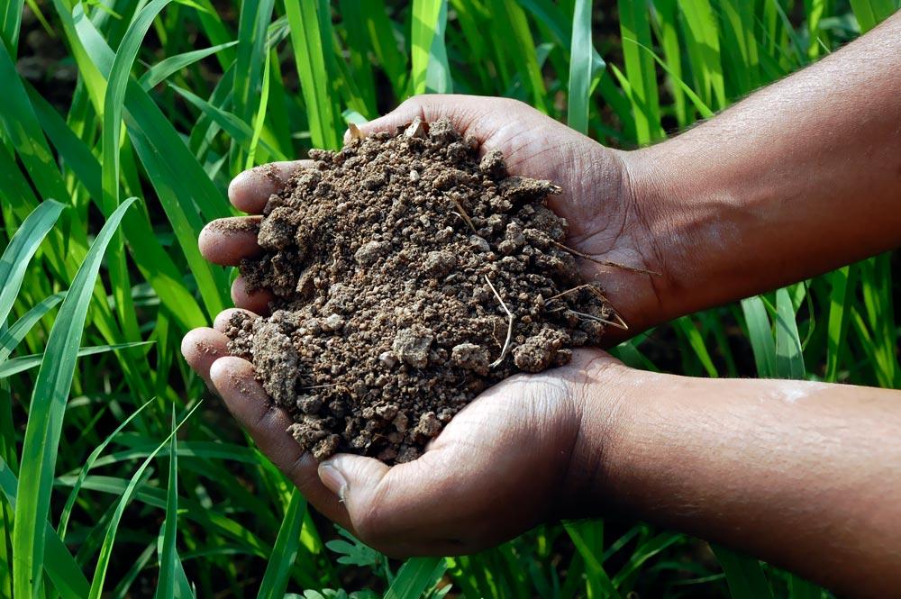 SoilHealth.jpg