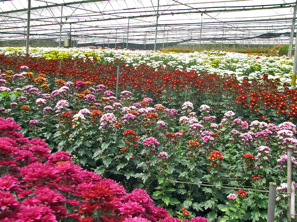 Flower-blooms_2159.jpg