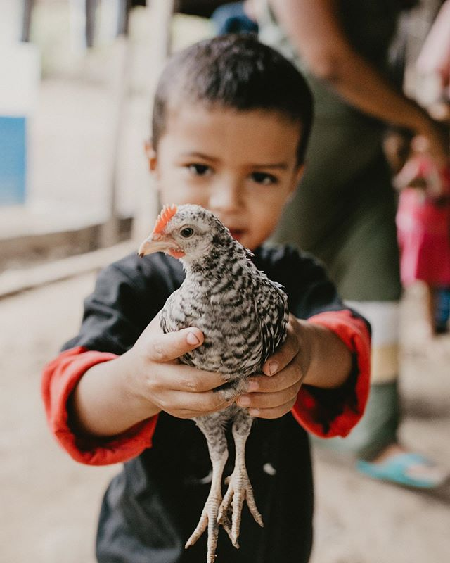 """Find a chicken, pick it up, and all the day you'll have good cluck!!"" [brief interlude from our regular scheduled programming for some quality word play 🤣] 📷: @alimarieparkerphoto #thelatitudeproject"