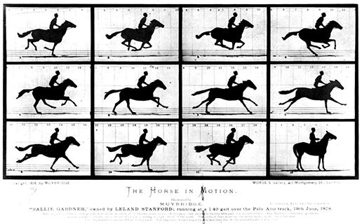 Eadweard Muybridge  The Horse in Motion